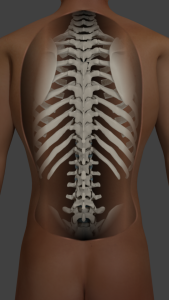 Invasive and Conservative Management for Spinal Pain